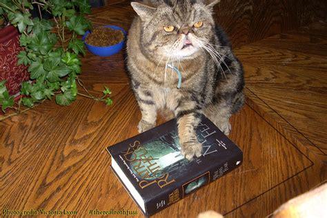 Ugly Cat Meme - cat ugly cat meme