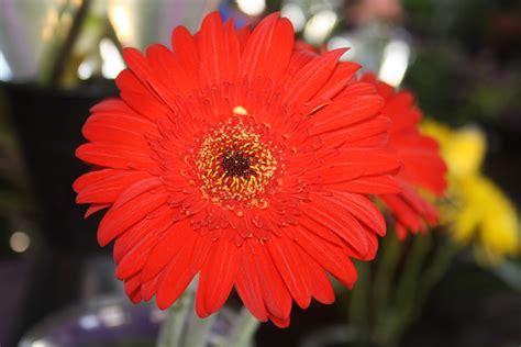 the beautiful and the weird flowers at the market 171 wheelsaretakingusaway