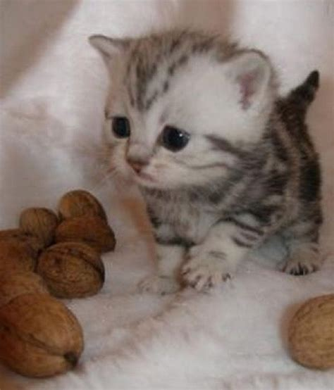 Cutest Cats Pet Pet Pet Product 4 by Best 25 Kittens Ideas On Cats And