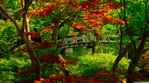 green japanese wallpaper lush greenery pictures beautiful gardens wonderwordz
