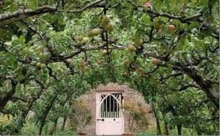 espalier on pinterest fruit trees espalier fruit trees