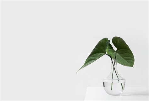 what is minimalism part 2 what being minimalist 12 quotes on the meaning of minimalism and why it can help
