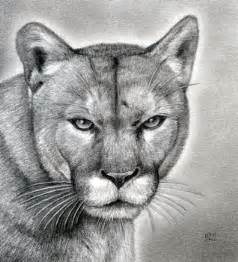 how to draw a realistic puma mountain lion step by step