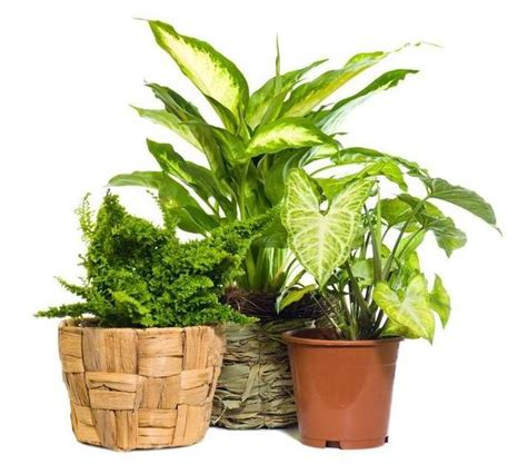 typical house plants 28 best common houseplants ivy house plants gurtyer attractive house plants 2015