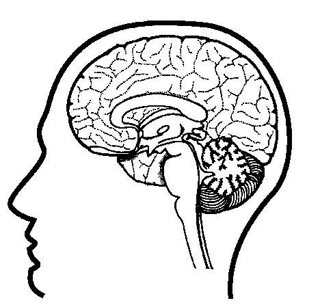 brain coloring page pdf human body
