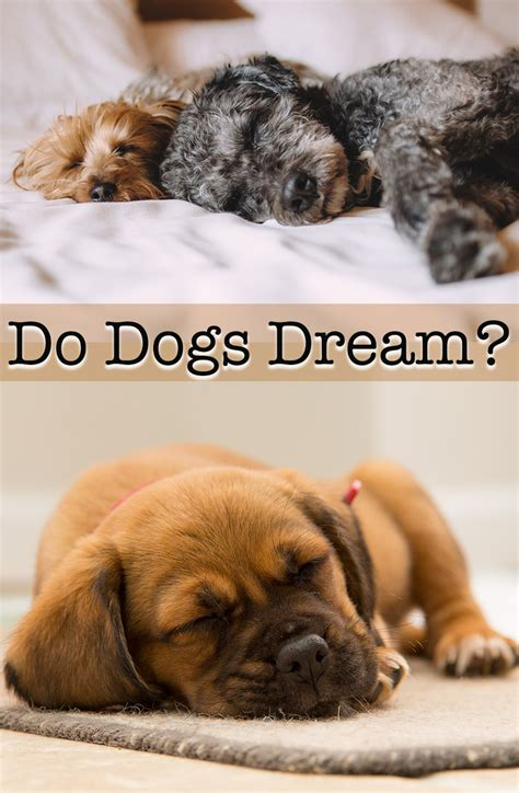 do dogs memory do dogs and what do dogs about the happy puppy site