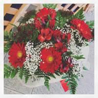bouquet di fiori per laurea fiori e piante a fiori e piante