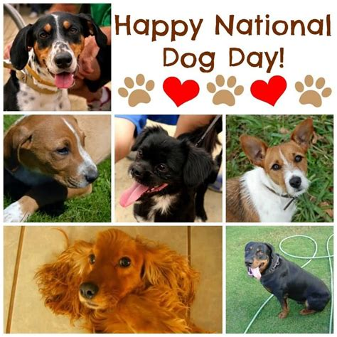 happy national puppy day it s national day three dogs picture