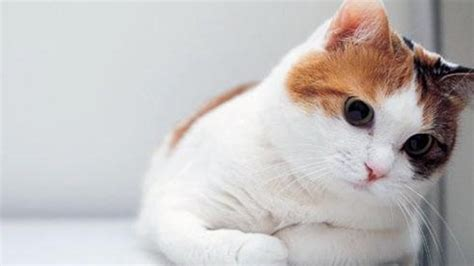 very cute wallpaper in hd cute cat wallpaper hd cat wallpaper