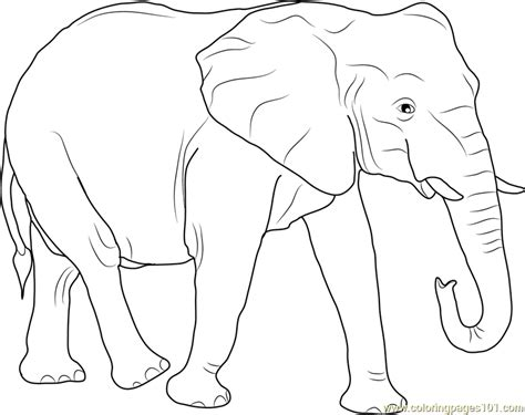african elephant coloring page free elephant coloring
