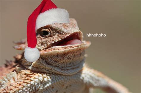 Hehehe Lizard Meme - laughing lizard wrex laughing lizard hhhehehe know your