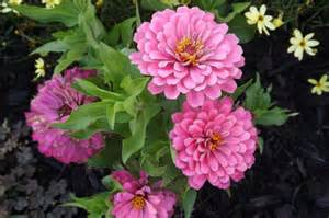 flowers in garden animated beautiful flower garden learn more by visiting