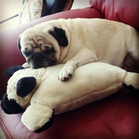 black pug pillow pug pillow