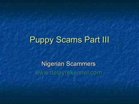 puppy scams puppy scams part iii