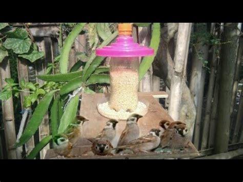 Tempat Pakan Burung Lb tempat pakan burung liar di alam bebas dari botol bekas