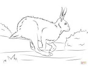 arctic hare coloring page www pixshark com images