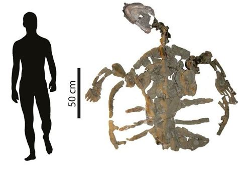 2 meter feet 120 million year old sea turtle remains unearthed in colombia