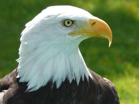 Backyard Bird Centre Alberta Birds Of Prey Centre Gets Visitors From All Over