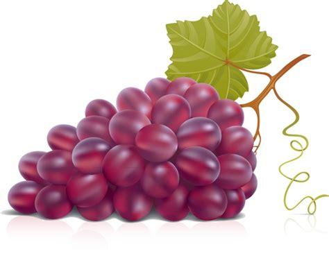 Great Home Design Tips by Purple Grapes Vector Graphics My Free Photoshop World