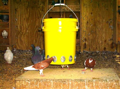 quail feeder wildlife feeder quail supplies
