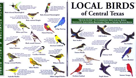 backyard birds of texas local birds quick guides to nature science