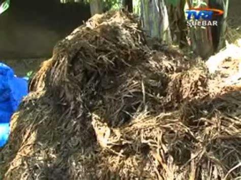 Sekam Bakar Semarang cara pembuatan pupuk organik dan micro organisme local