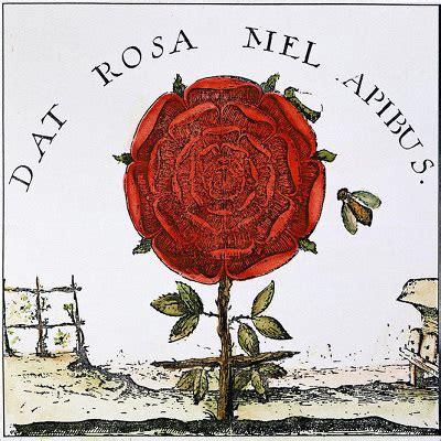 rosa mistica fiore simbolismo e terapeutica della rosa thesaurus naturae
