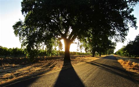 photography nature landscape road summer trees sun