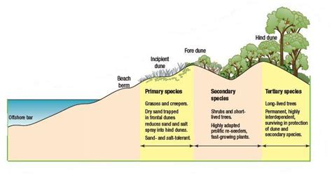 vegetation pattern formation in semi arid grazing systems dune restoration diagram google search habitat