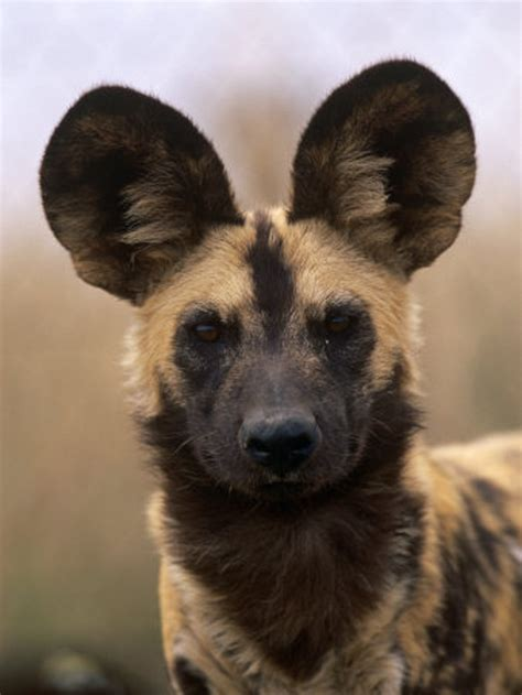 crossbreed dogs crossbreeds