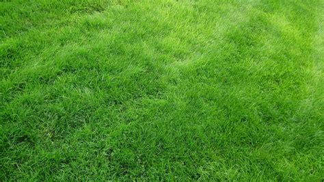 Green Grass by Green Grass Field 4k Widescreen Wallpaper Hd Wallpapers