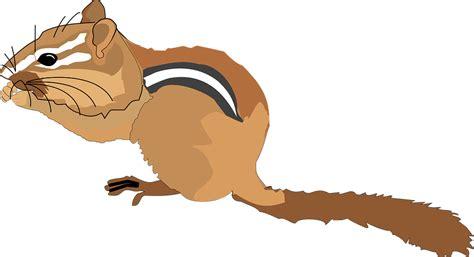 free vector graphic chipmunk small forest nut free