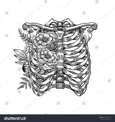 chest tattoo vector tattoo anatomy vintage floral illustration floral stock
