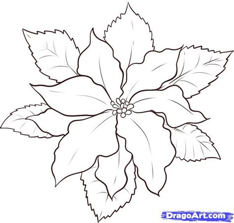 Poinsettia Coloring Page Coloring Home Poinsettia Coloring Page