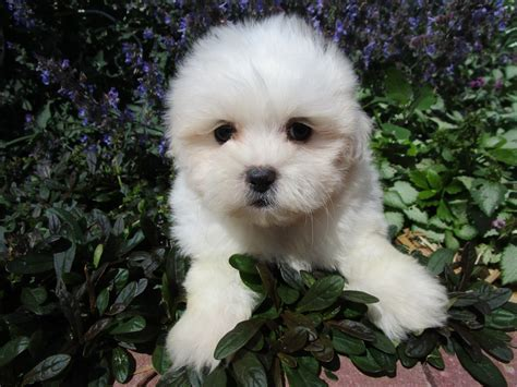 buttercup puppies wonders ionic colloidal clay holistically raised puppies