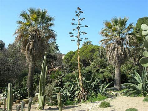 giardino botanico cagliari 17 best images about botanical garden orto botanico