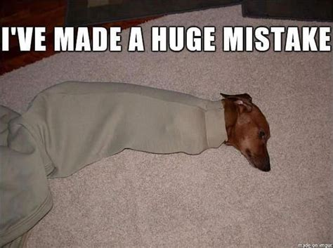 Funny Dachshund Memes - if you love dachshunds then you will love these cute and