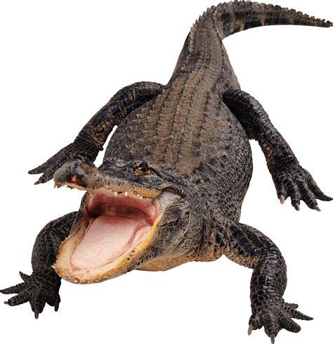 Alligator Black alligator black and white clip images