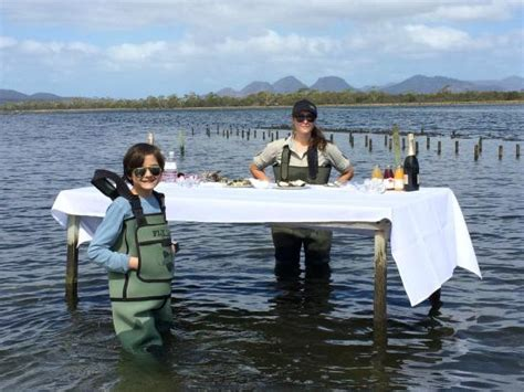 scow bay oyster farm marine oyster farm picture of saffire freycinet coles