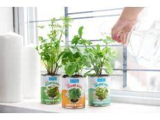 light  growing plants indoors hgtv