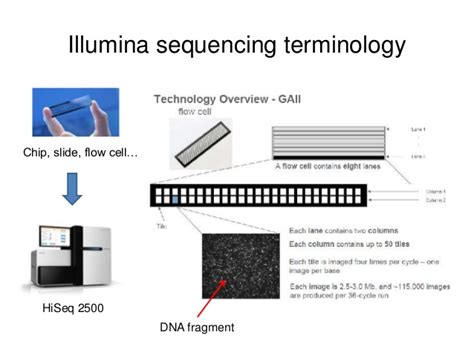 sequencing illumina next generation sequencing format and visualization with