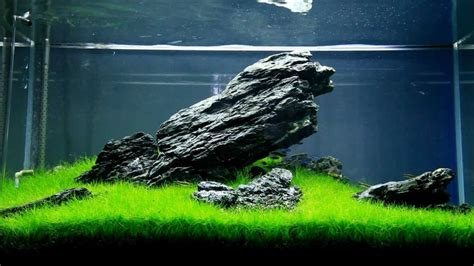 aquascaping guide aquascaping guide for beginners