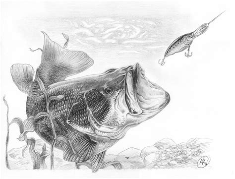 quot largemouth bass quot graphite pencil on paper 10 25 quot x 15
