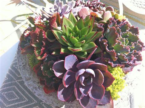 piante con fiori composizioni piante grasse piante grasse