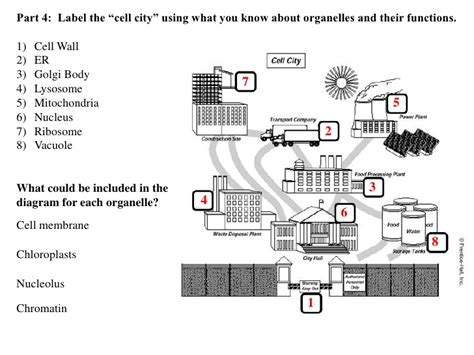 Cell City Worksheet by Cell City Analogy Worksheet Free Worksheets Library