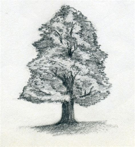 Drawing Trees by Draw A Tree Simply And Easily