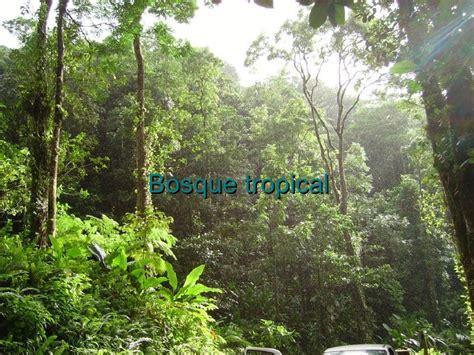 imagenes de bosques otoñales bosque tropical