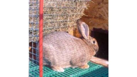 coniglio alimentazione alimentazione coniglio e legno pregiato dalle siepi