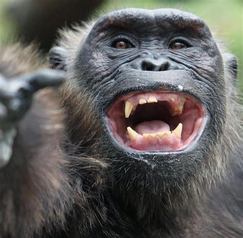 zoologischer garten rabatt gutscheine zoo berlin