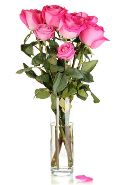 cura roselline in vaso efiorista in senegal ti aiuta a regalare e